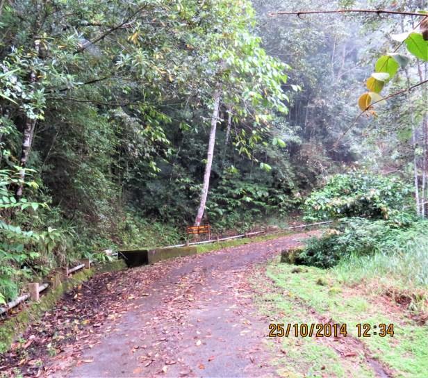 07 Gunung Alab montane forest 0098.JPG