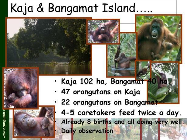 kaja-bangamat-island-l.jpg