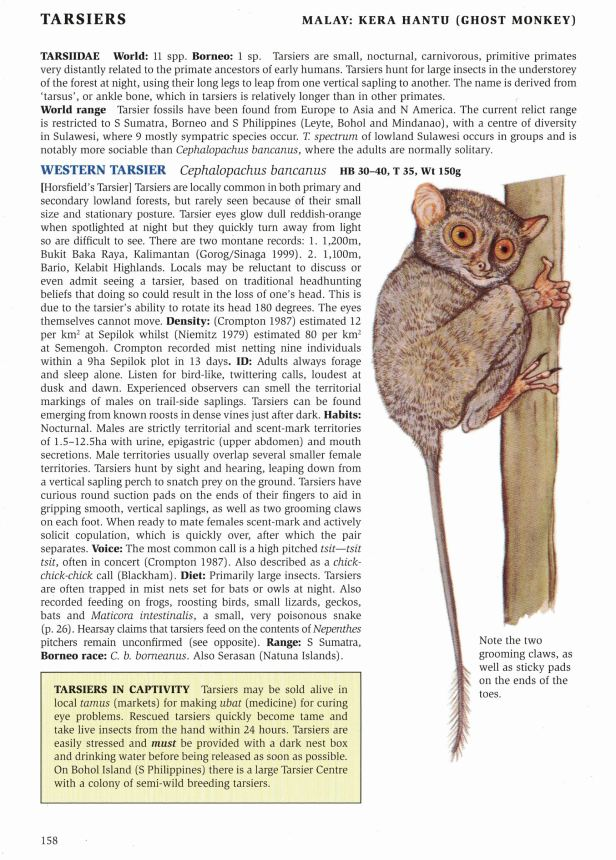 01 158-147 Tarsier text_0005