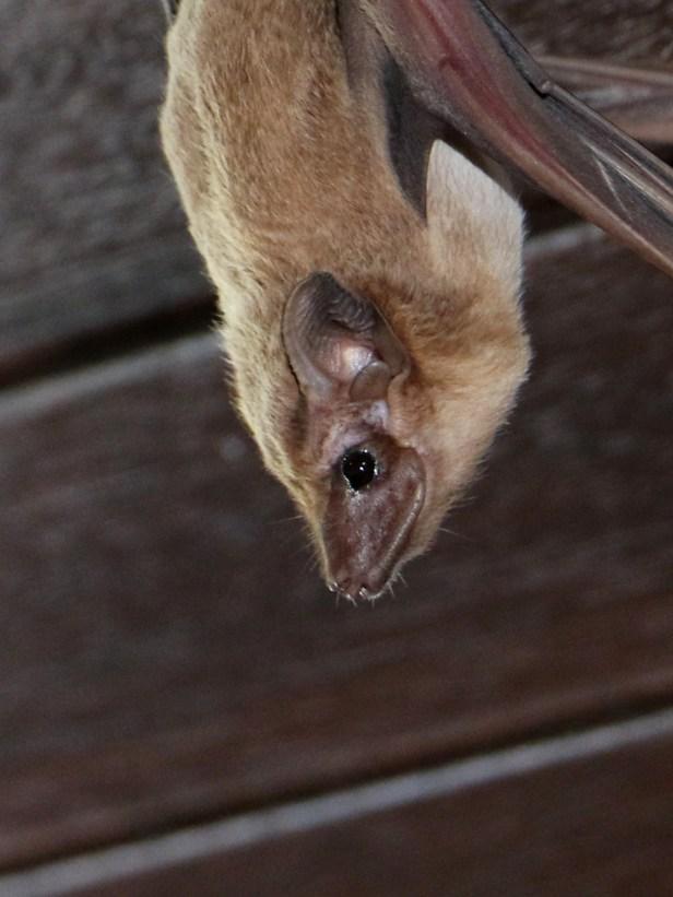 03 Tomb bats Tg Aru beach P7A2304