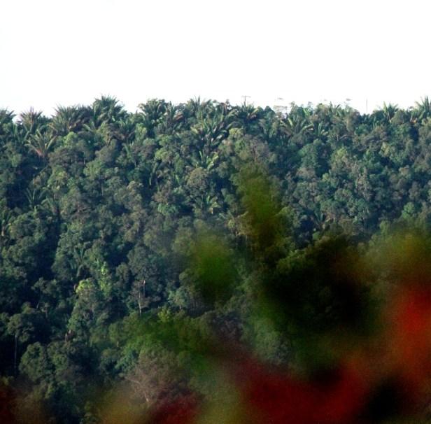 06 Gunung Penrissen IMG_4621.jpg