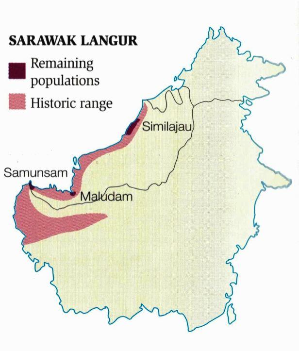 170 Sarawak Langur map .jpg