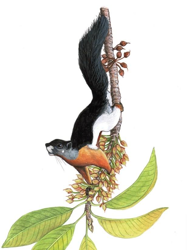 196 KPm ORIG Prevosts pollinating Mahuca 600 dpi v1