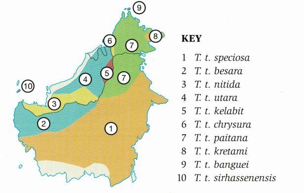 150- Treeshrew map Borneol.jpg
