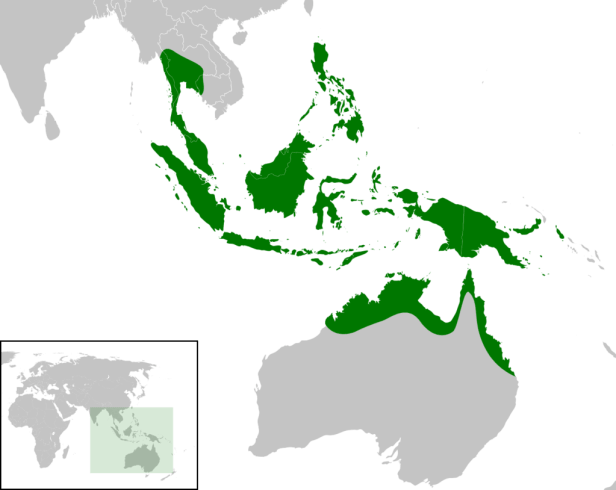 Nauclea_orientalis_distribution_map.png