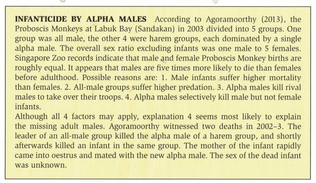 Proboscis males kill infants.jpg