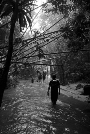 forest wanderer