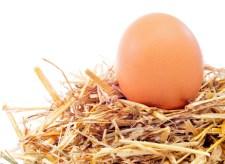 Æg økologi