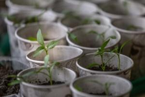 Grønne planter, Et sundt indeklima