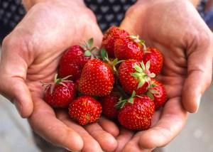 Jordbær - Haven i juni måned