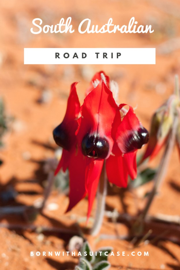 A Road Trip to South Australia