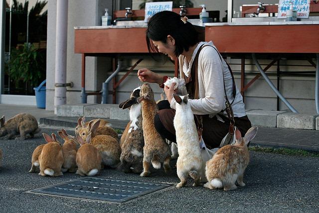Rabbits--Okunoshima-Japan