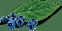 leaf-free-bor