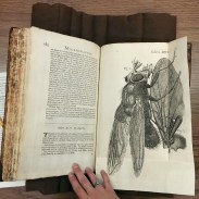 "Robert Hooke's ""Micrographia"" features incredibly detailed etchings showing what could be seen through magnification for the first time."