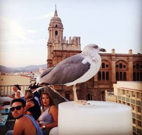 malaga_hotell_molina_lario_tak