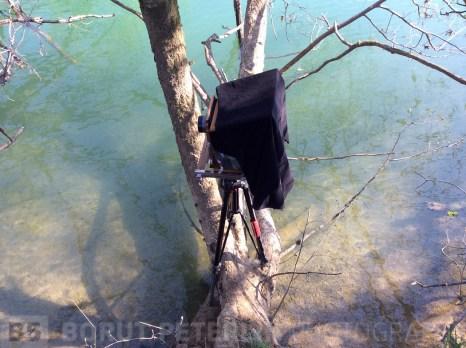 Camera on a tree