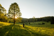 Photo: Adrijan Pregelj / Woodland Beyond Photography