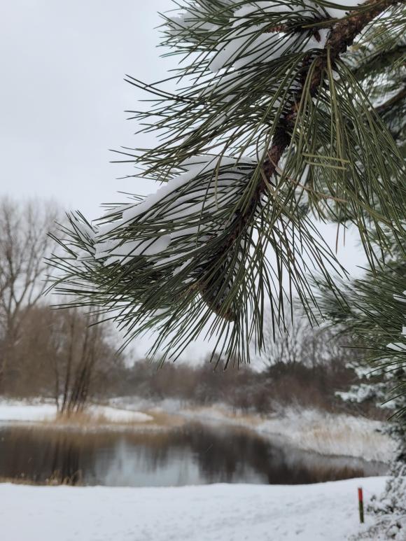 Hoekse bosjes in de winter