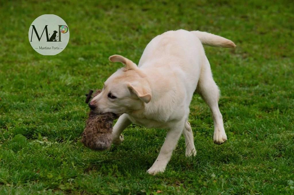 educazione eaddestramento cani bosco retriever