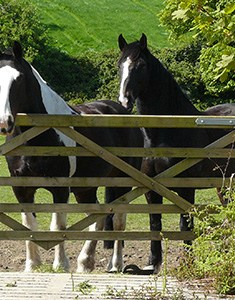 Horses - Our Animals - Boscrowan Farm Family Friendly Award Winning Self Catering Holiday Cottages