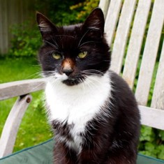 Our Animals - Molly the Cat - Boscrowan Farm Family Friendly Award Winning Self Catering Holiday Cottages