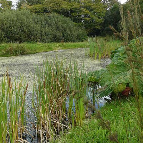 The Wildlife Pond at Boscrowan Farm - Family Friendly Award Winning Self Catering Holiday Cottages