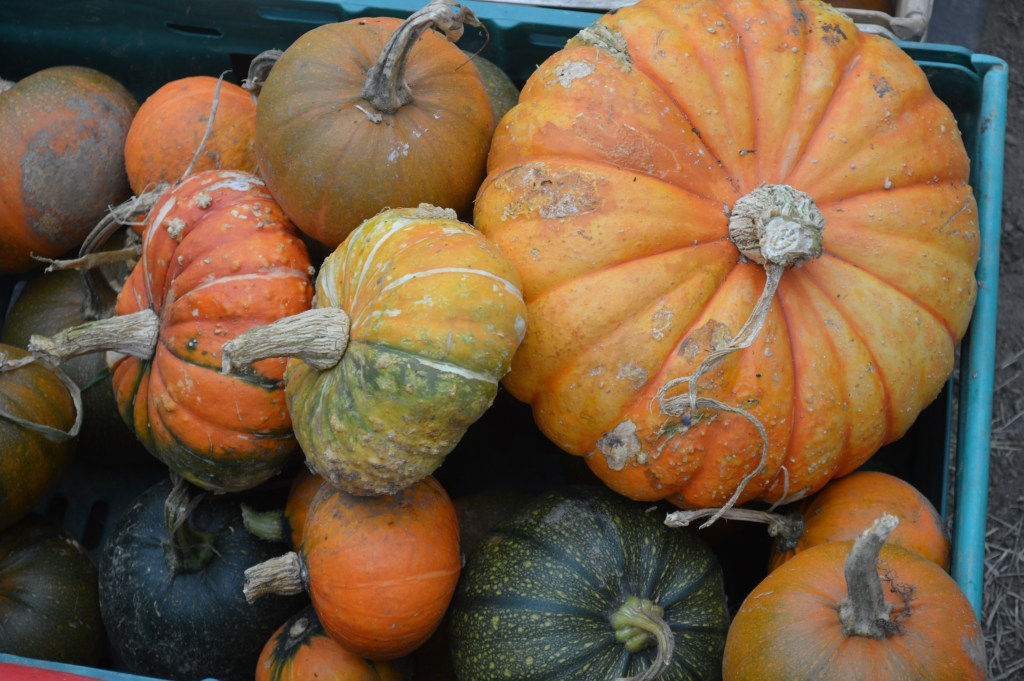 pumkins and gourds