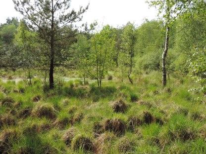 oprukkend bos (5)