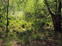 oprukkend bos (6)