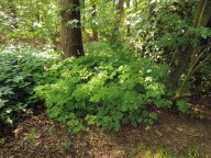gebroken hartje in het bos (1)