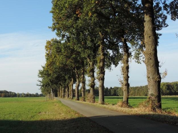 langs-een-smalle-weg-2