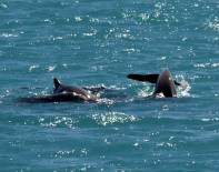 Snub-nosed dolphins in Woodwark Bay, the Whitsundays.