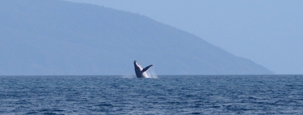 Whales were often close but by the time you had your camera, they were gone. Lots in the distance though.