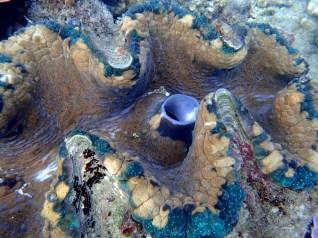 Amazing clam detail