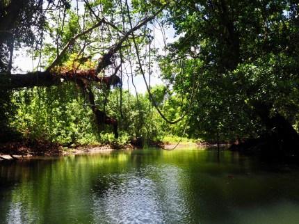 Our dinghy trip up a long long jungle river
