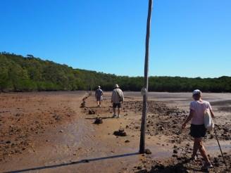 A mangrove trail on the shortcut track.