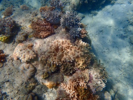This photo shows a collection of new coral growth.