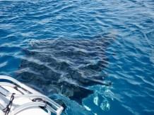 Curious enough to swim under & around us.