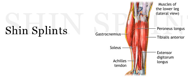 medial lower leg muscles diagram new holland tractor wiring shin splints or compartment syndrome boston bodyworker