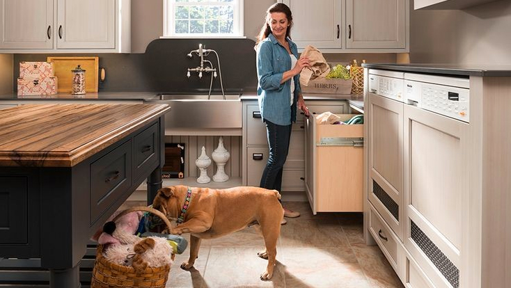 How To Create a DogFriendly Home  Boston Design Guide