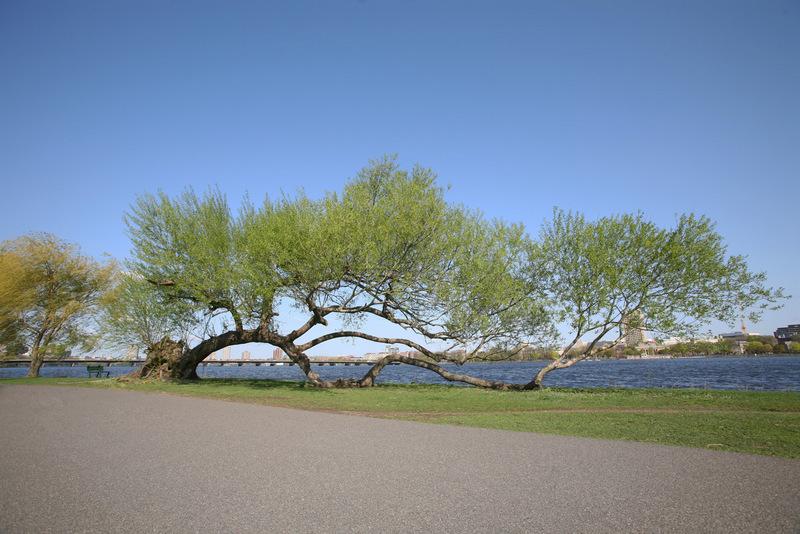 2011_Eaden_Tree1