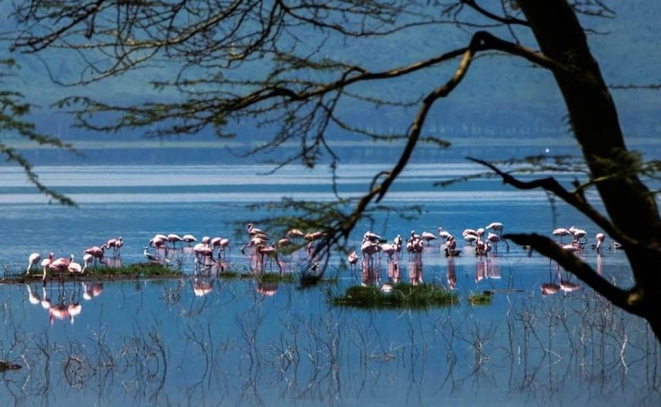 2015_Chai_Flamingo