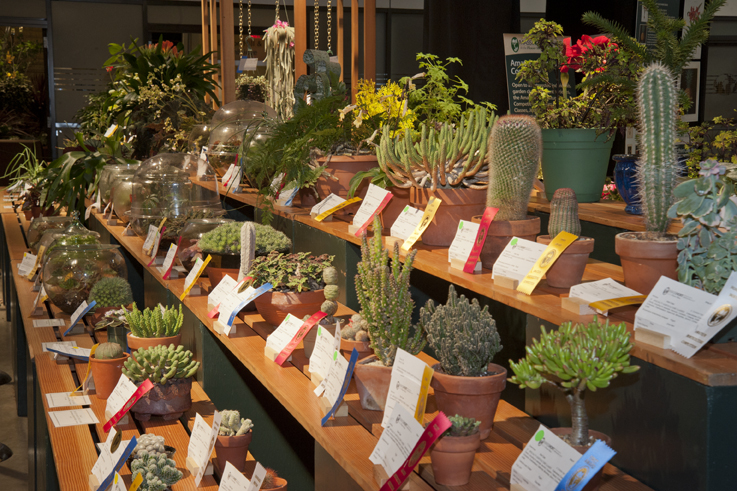 Boston Flower  Garden Show Competitions