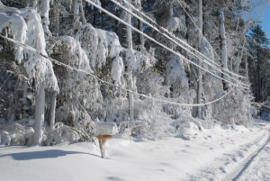 snow covered road in MA with low power wires