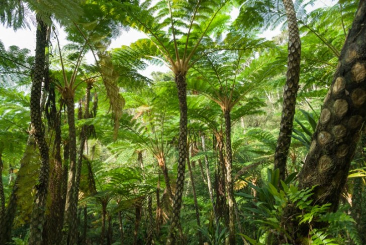photo credit: Tree fern jungle! Okinawa, Japan via photopin (license)