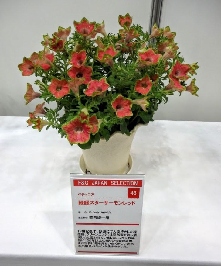 P4230399