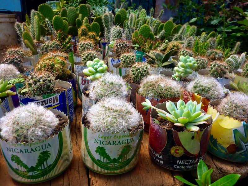 cactus-639501_1920