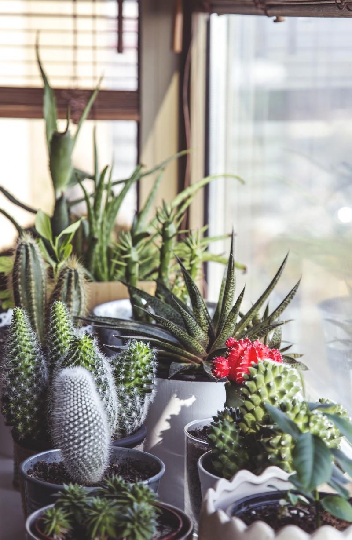 cactus-1082321_1920