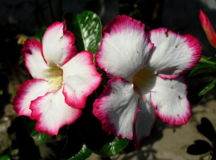 bunga-209623_1280