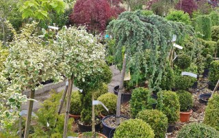 Plant and Tree Nursery Stock